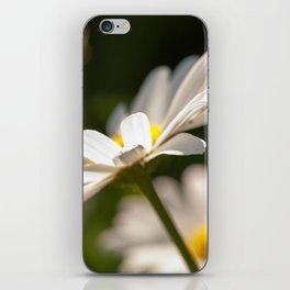 White daisy iPhone Skin