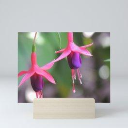 Fuchsia in the Rose Garden Mini Art Print