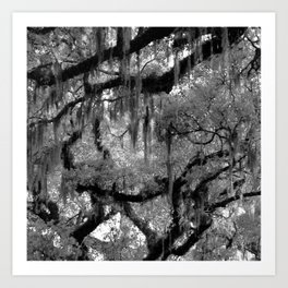 Oak and Moss in Black and White, Study 2 Art Print
