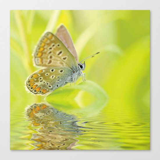 zen style butterfly green outdoor Canvas Print