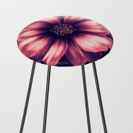 The Beauty Counter Stool