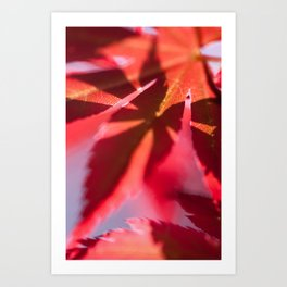 Sunshine on my Japanese Maple - Botanical Colorful Wall Art - Close-up Photography in my Garden - Foliage Structures  Art Print