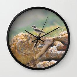 Cape Wagtail Wall Clock