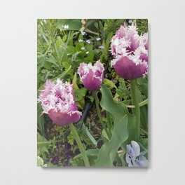 Purple Fringed Tulip Metal Print