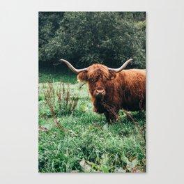Scottish Highland Cattle Canvas Print