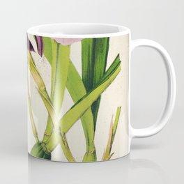 Miltonia Spectabilis Vintage Botanical Floral Flower Plant Scientific Illustration Coffee Mug