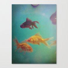Three Fish More fish Canvas Print