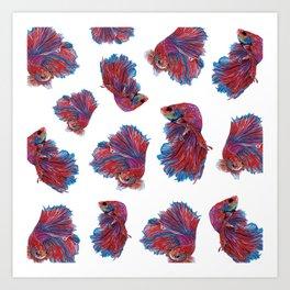 Ocean Theme- Red Blue Betta Fish Art Print
