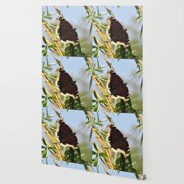 Mourning Cloak Butterfly Sunning Wallpaper