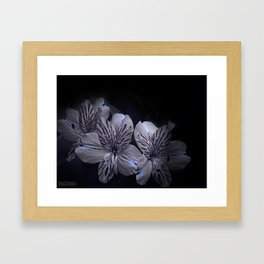 Lily in the Dark Framed Art Print