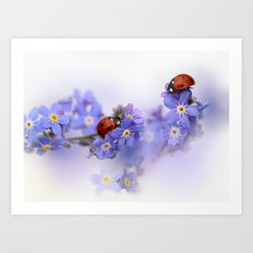 Ladybirds on Forget-me-not Art Print