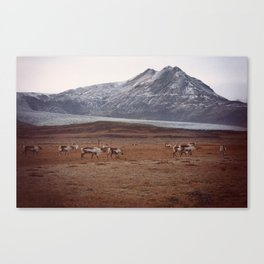 Roaming Canvas Print