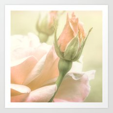 Gentle Roses Art Print