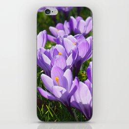 Purple Crocuses iPhone Skin
