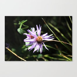 Purple Wildflower Canvas Print
