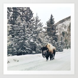 Frosty Bison Art Print