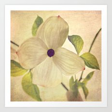 dogwood closeup Art Print