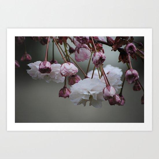 Zierapfel Blüte   Art Print