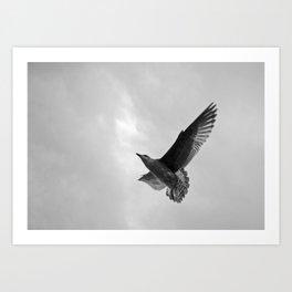 A Seagull Art Print