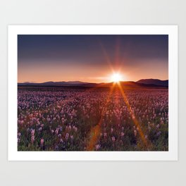 Sun Rays and Wildflowers Art Print