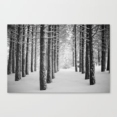 Hometown Pine Canvas Print