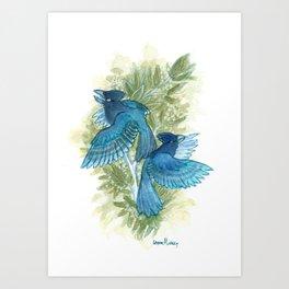 Blue Jays and Tea Olive Plant Art Print