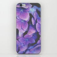hydrangea iPhone & iPod Skins featuring Hydrangea by Christine Hall