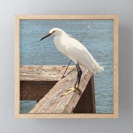 Herring Framed Mini Art Print