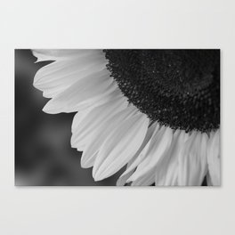 Black and White Sunflower Photography Print Canvas Print