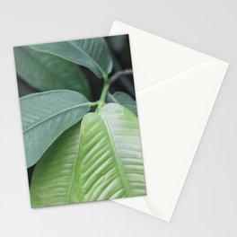 Botanic Touch Bold Stationery Cards
