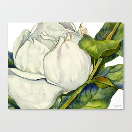 Magnolia with Leaves Canvas Print