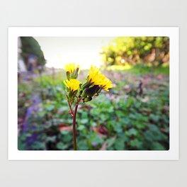 Yellow flowers! Art Print