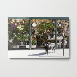 Dog in the Flower District, Paris - travel photography Metal Print