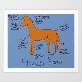 Pharaoh Hound Art Print