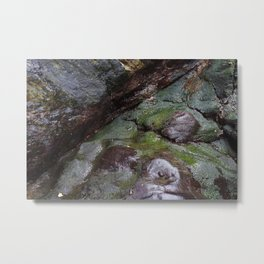 Algae Covered Natural Coastal Rock Texture Metal Print