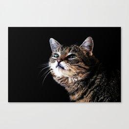 Lieschen Müller, Lilly the sweet tiger cat Canvas Print