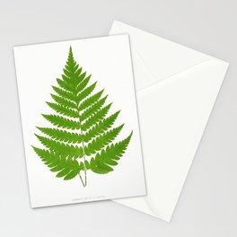 Edward Joseph Lowe - Acrostichum Alienum from Ferns Stationery Cards