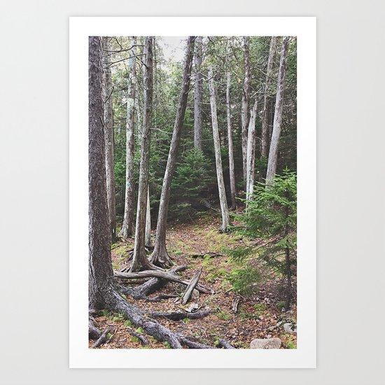 Maine Woods Art Print