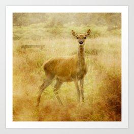 Female Red Deer Art Print