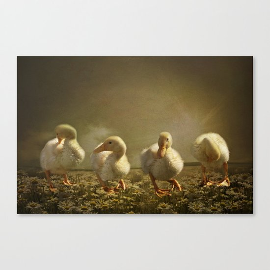 Dancing On Daisies Canvas Print
