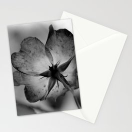 Delicate transparency Stationery Cards