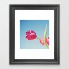 . Sun Kissed Tulip .  Framed Art Print