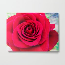 Red Rose Close Up Metal Print