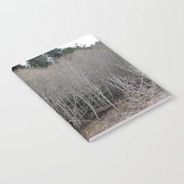 Birch Forest Notebook
