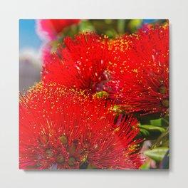 pohutukawa - New Zealand Christmas tree with red flowers Metal Print
