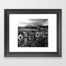 toscana girasoli Framed Art Print