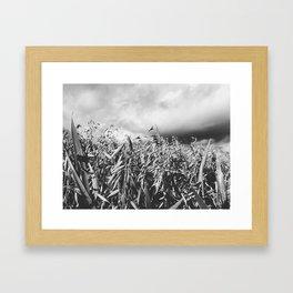 Fields of oat, Norway Framed Art Print