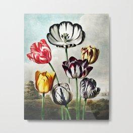 Robert John Thornton - Tulips Metal Print