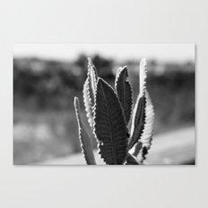 fuzz Canvas Print
