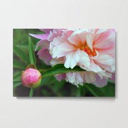 Pink Peony Blossom and Bud Metal Print
